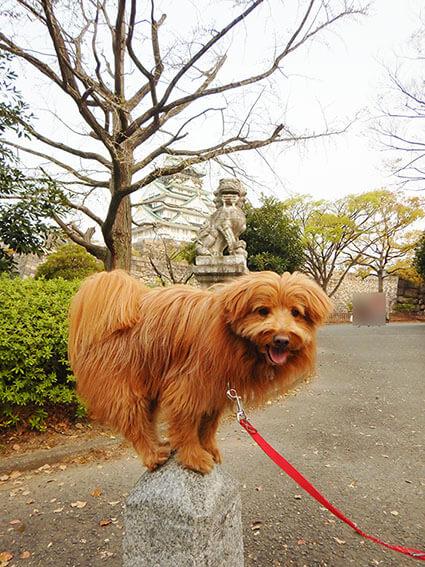 絶妙なバランスで大阪城をバックにポーズをとる犬。