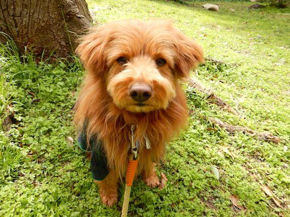 ぶすーっとしてる犬の写真