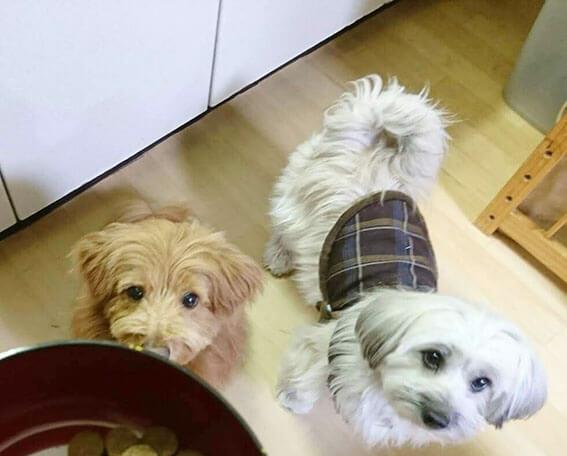 ご飯を待つ犬の写真
