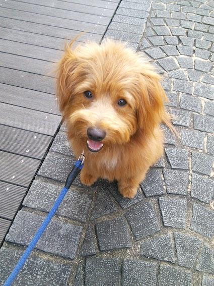 小さく笑う犬の写真