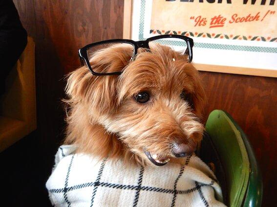 メガネをかけた犬の写真