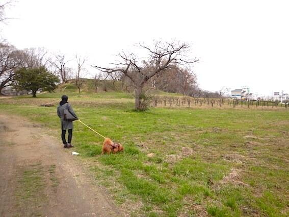 津堂城山古墳と犬