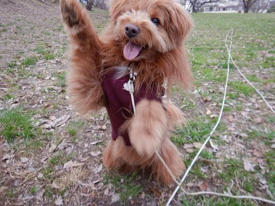 ハイタッチ!する犬の写真
