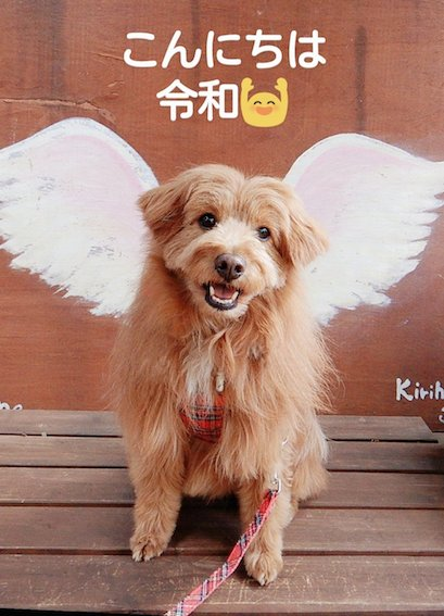 令和を祝う犬の写真