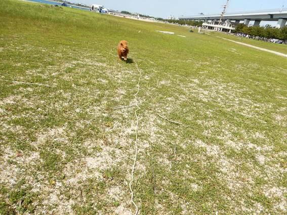 ボール投げをする犬の写真