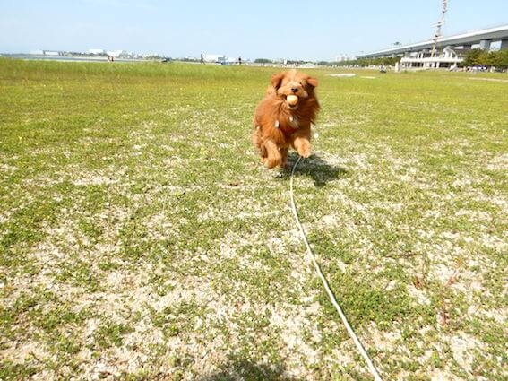ボール投げをして遊ぶ犬の写真