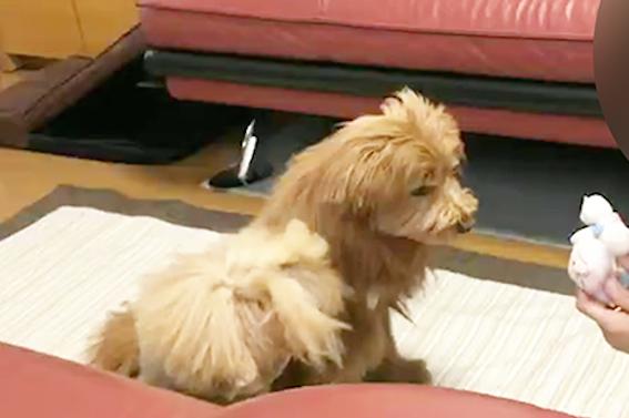 怒られている犬の写真