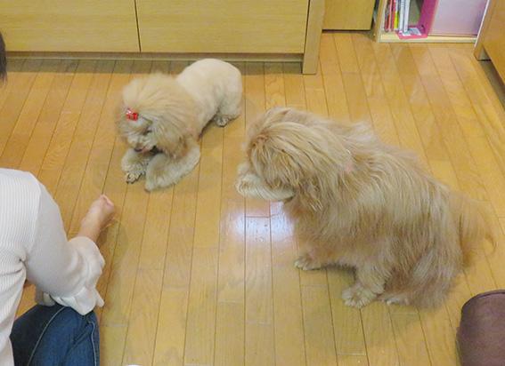 並んでオスワリする犬。
