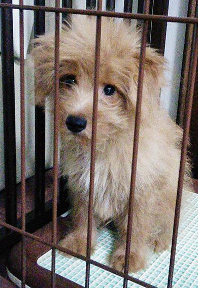 引き取られた保護犬の子犬