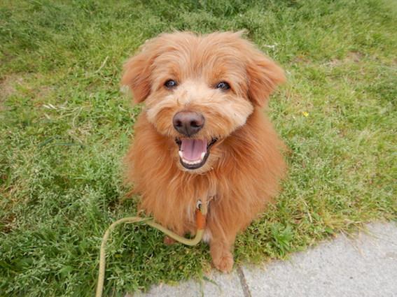 幸せになった元保護犬