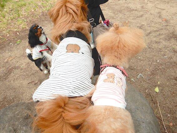 おそろいの犬服を着た犬達