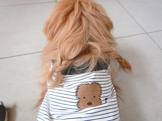 オリジナル犬服を着た犬