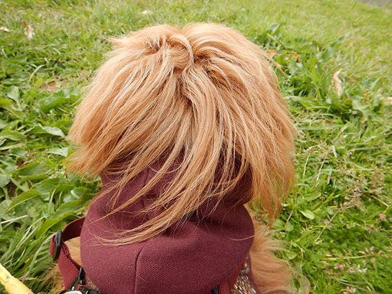 犬の後頭部の写真