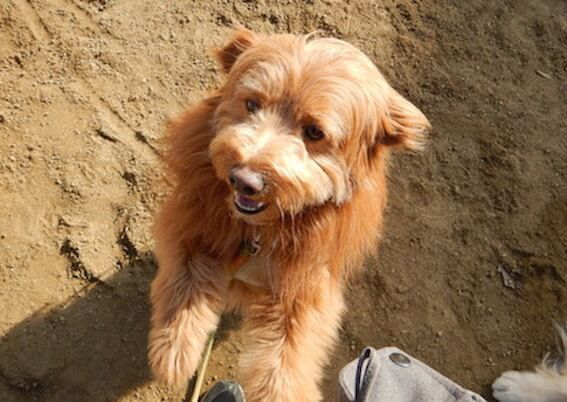 抱っこをせがむ犬の写真