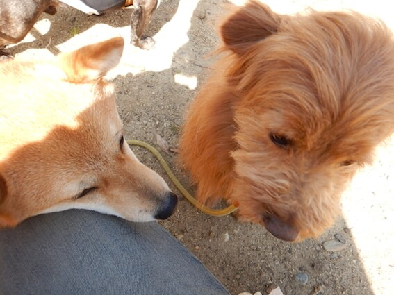子犬から目をそらす犬