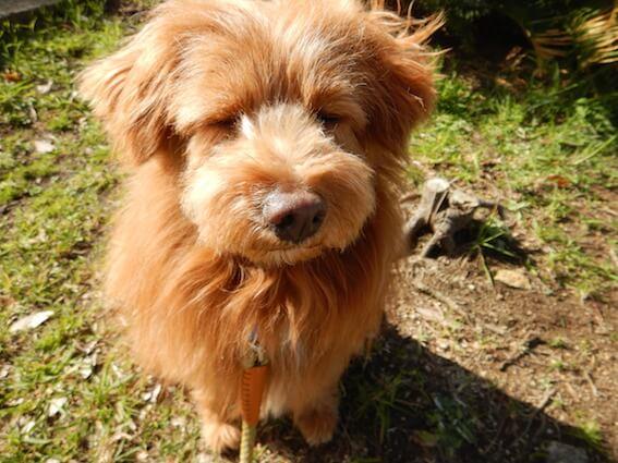 ブスッとした犬の写真