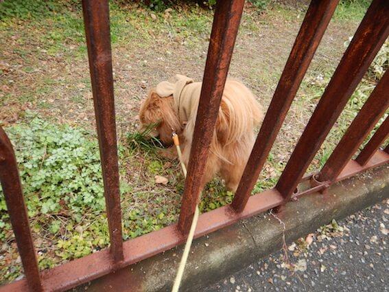 柵の中に入る犬