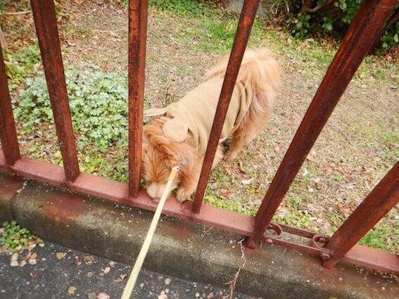 柵の中から出されそうになっている犬