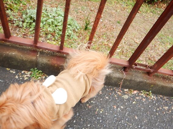 柵の中から出てくる犬