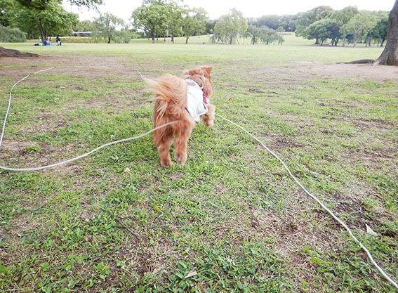 ボールを追いかける犬の後ろ姿