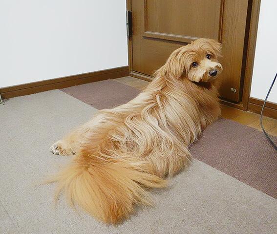 飼い主をドアの前で待つ犬