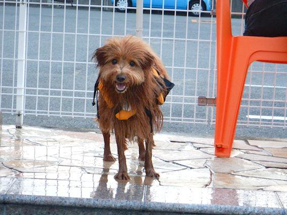 水に濡れた犬の写真