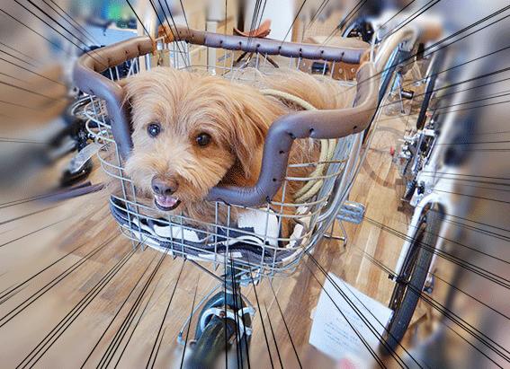 カゴを加工した犬用自転車完成