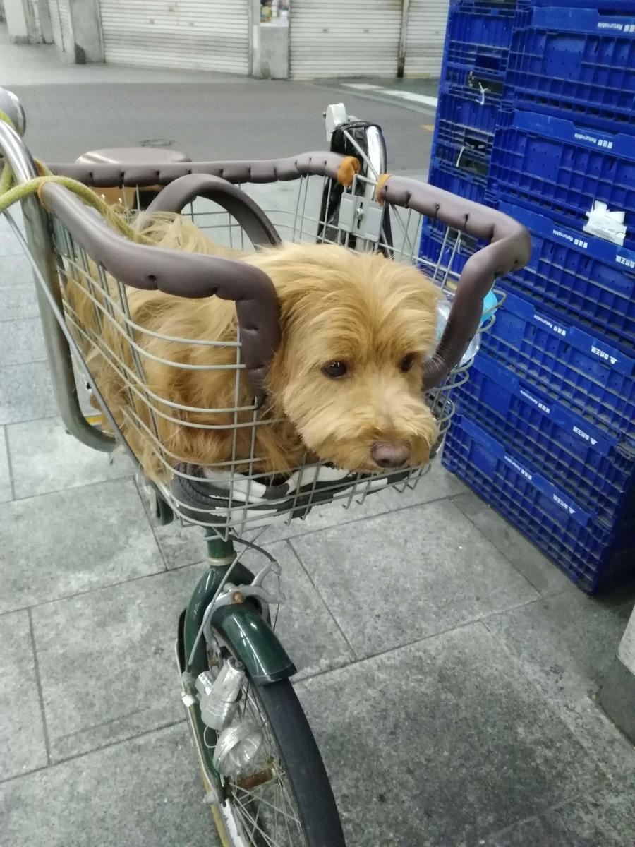 犬用自転車に乗る犬