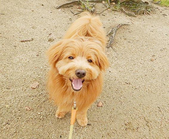 ニコニコ笑顔の犬