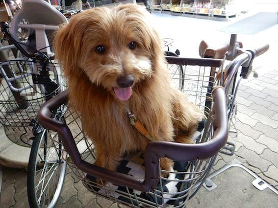 自転車に乗ってる犬