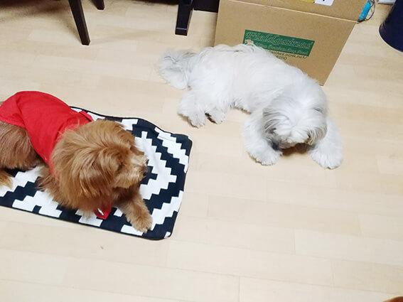 2頭の犬が仲良く寝ている