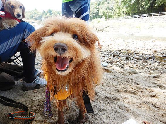 川べりで笑顔の犬