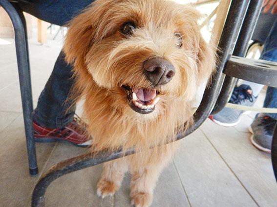 テーブルの足元で笑顔の犬