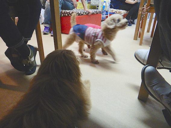 保護犬カフェ天神橋店の店内にいる犬