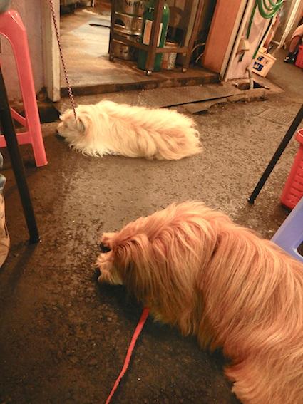 お店の地面で寝る犬たち