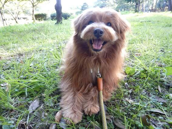 笑顔で芝生の上にいる犬