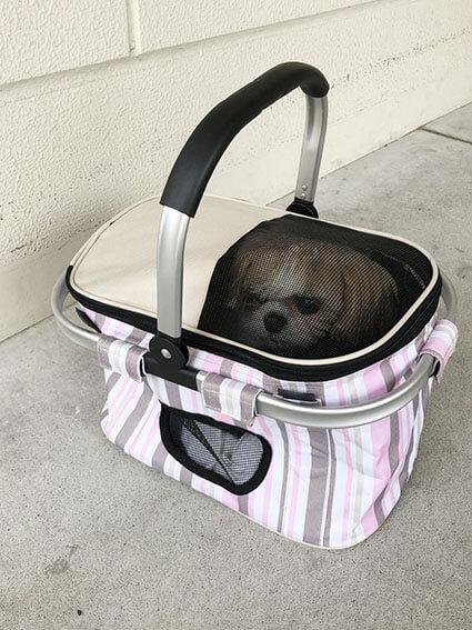 バッグに入ってるシーズー