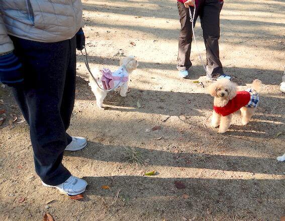 別々に散歩する犬