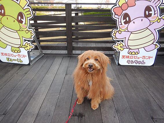 天橋立ビューランドのキャラクターと犬