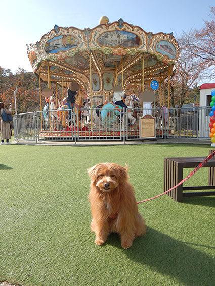 メリーゴーランドの前の犬