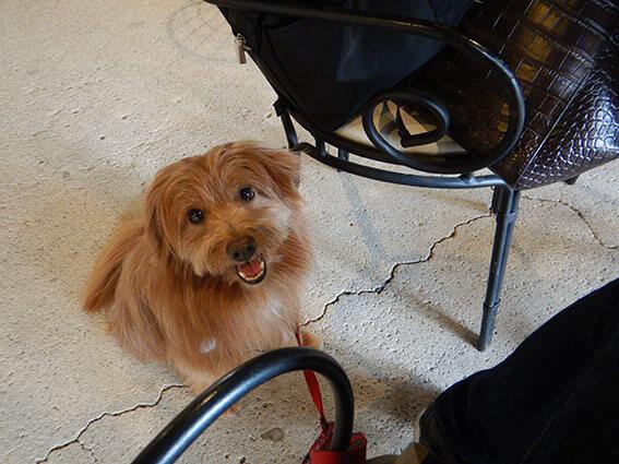 カフェでご機嫌の犬