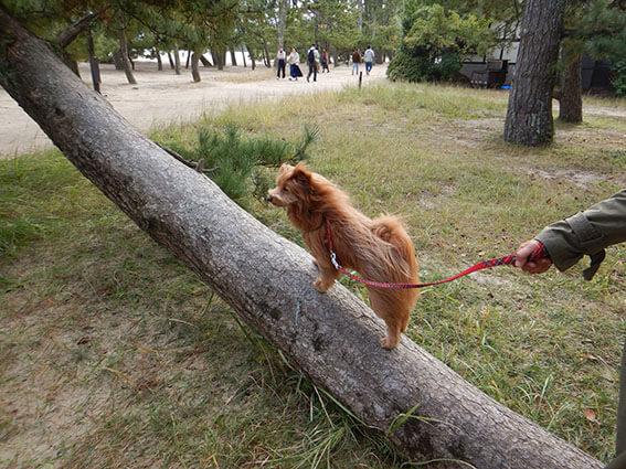 木に登る犬