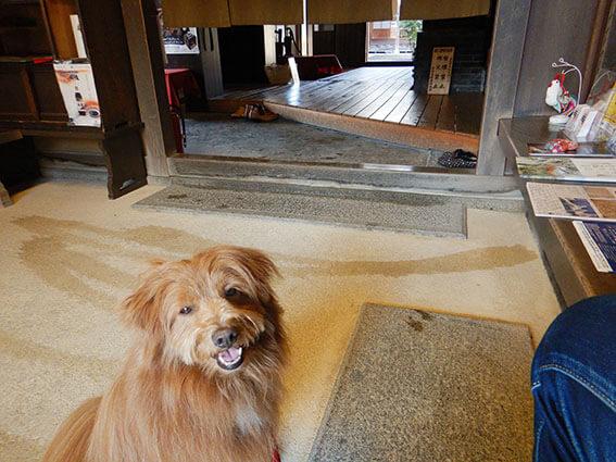 旧尾藤家住宅の土間に入る犬