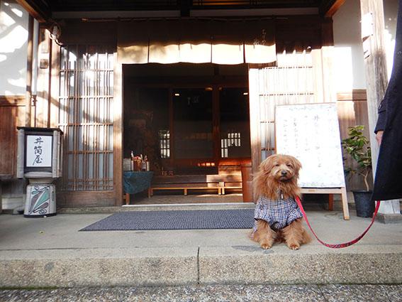 井筒屋の正面玄関にお座りする犬