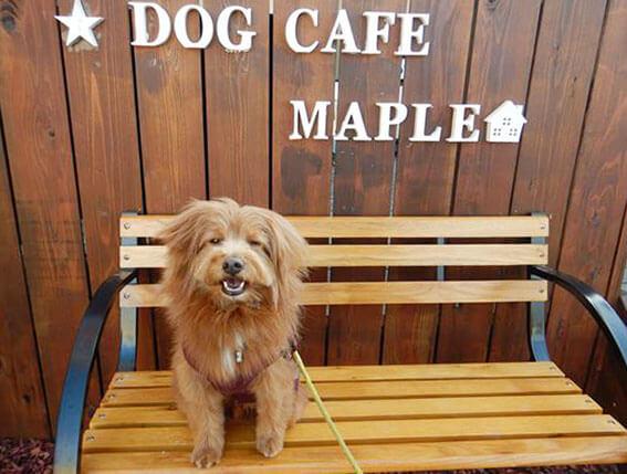 ベンチの上で写真を撮る犬