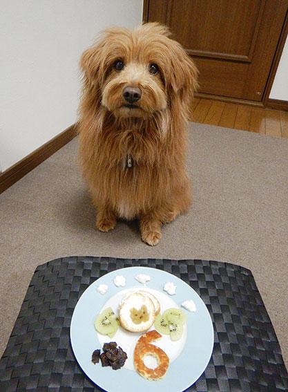誕生日を祝われる犬