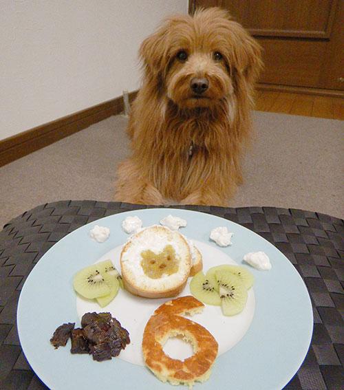 誕生日をお祝いされる犬
