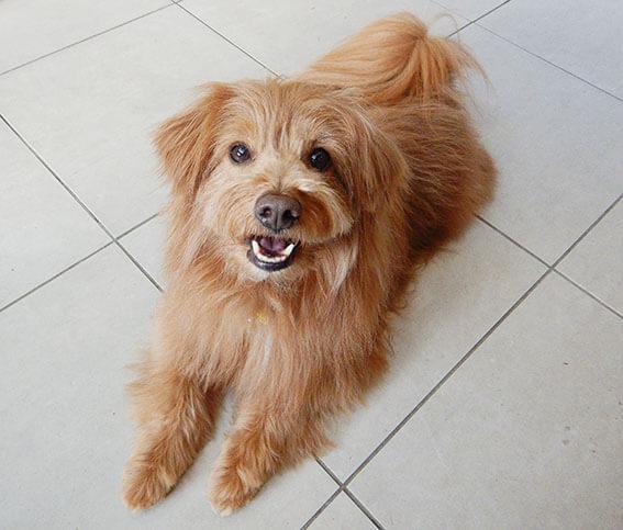 フセして笑顔の犬