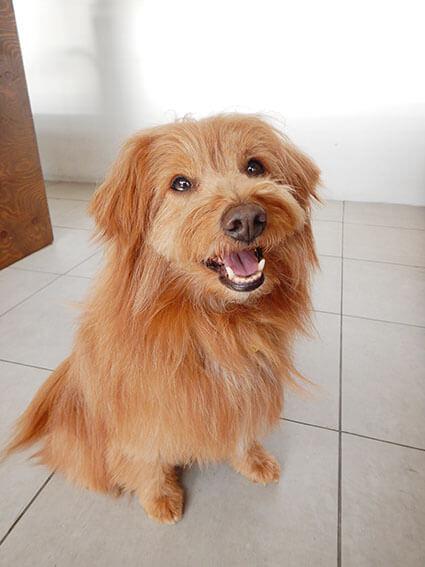 おすわりして笑顔の犬