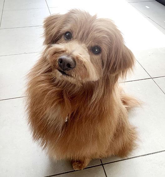 うるうるした顔で見上げる犬